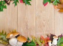 De achtergrond van de herfst met paddestoelen Stock Afbeelding