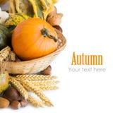 De achtergrond van de herfst met pompoenen Royalty-vrije Stock Afbeeldingen