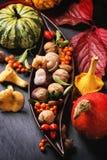 De achtergrond van de herfst met pompoenen Stock Fotografie