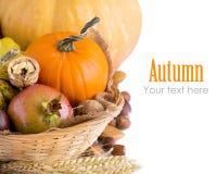 De achtergrond van de herfst met pompoenen Stock Afbeelding