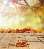 De achtergrond van de herfst Rode en oranje het bladclose-up van de kleurenKlimop Royalty-vrije Stock Afbeeldingen