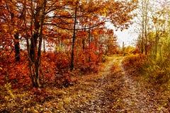 De achtergrond van de herfst Rode en oranje het bladclose-up van de kleurenKlimop Royalty-vrije Stock Foto