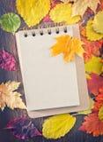 De achtergrond van de herfst Rode en oranje het bladclose-up van de kleurenKlimop Stock Fotografie