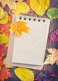 De achtergrond van de herfst Rode en oranje het bladclose-up van de kleurenKlimop Stock Foto's