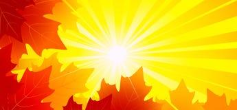 De achtergrond van de herfst Rode en oranje het bladclose-up van de kleurenKlimop Royalty-vrije Illustratie