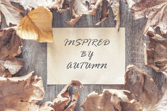 De achtergrond van de herfst Rode en oranje het bladclose-up van de kleurenKlimop Royalty-vrije Stock Foto's