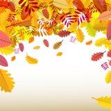 De achtergrond van de herfst Rode en oranje het bladclose-up van de kleurenKlimop Stock Foto