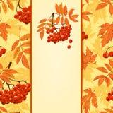 De achtergrond van de herfst Rode en oranje het bladclose-up van de kleurenKlimop Vector illustratie Stock Foto