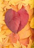 De achtergrond van de herfst van kleurrijke bladeren Stock Foto's