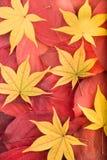 De herfstachtergrond van rode en gele bladeren royalty-vrije stock afbeeldingen