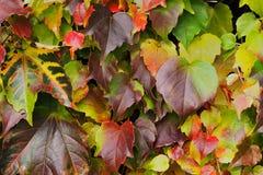 De achtergrond van de herfstbladeren stock fotografie