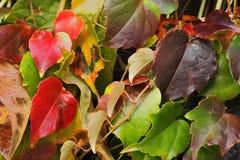 De achtergrond van de herfstbladeren Stock Afbeelding