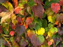 De achtergrond van de herfstbladeren stock afbeeldingen