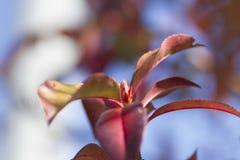 De achtergrond van de herfstbladeren, horizontale achtergrond Royalty-vrije Stock Afbeeldingen