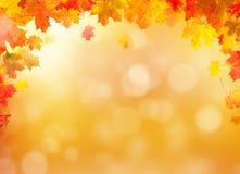 De achtergrond van de herfstbladeren met vrije ruimte voor tekst Royalty-vrije Stock Fotografie