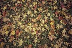 De achtergrond van de herfstbladeren - wijnoogst royalty-vrije stock foto