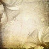 De achtergrond van de hibiscus stock fotografie