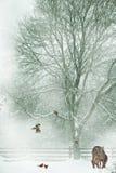 De achtergrond van de kerstkaart. stock foto's