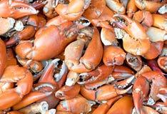 De achtergrond van de krabzeevruchten van de scharenklauw Stock Afbeelding
