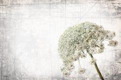 De achtergrond van de kruidentextuur Royalty-vrije Stock Foto