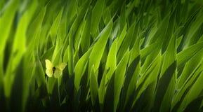 De Achtergrond van de kunst gaat groen weg Royalty-vrije Stock Foto