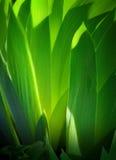 De Achtergrond van de kunst gaat groen weg stock fotografie