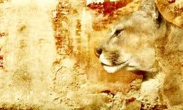 De achtergrond van de leeuw Royalty-vrije Stock Afbeeldingen