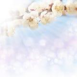 De achtergrond van de lente Stock Foto