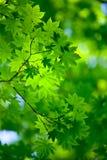 De achtergrond van de lente Royalty-vrije Stock Afbeelding