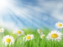 De achtergrond van de lente Royalty-vrije Stock Fotografie