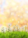 De achtergrond van de lente Royalty-vrije Stock Afbeeldingen