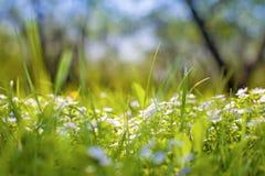 De achtergrond van de lente Stock Afbeelding
