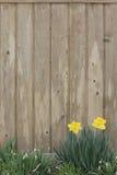 De Achtergrond van de lente Stock Fotografie