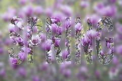 De achtergrond van de lente Royalty-vrije Stock Foto