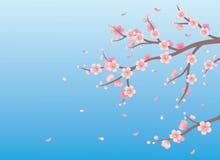 De achtergrond van de lente. Stock Foto