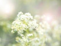 De achtergrond van de lente Gunst Huwelijk De wijnoogst van het de lentegevoel stock afbeeldingen