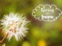 De achtergrond van de lente Gunst Huwelijk De wijnoogst van het de lentegevoel stock foto