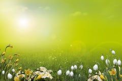 De achtergrond van de lente, Landschap Stock Afbeelding
