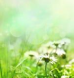 De achtergrond van de lente met bloemen royalty-vrije stock foto's
