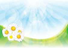 De achtergrond van de lente met de bloemen van de Kamille Royalty-vrije Stock Foto