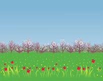 De achtergrond van de lente met een bloeiende tuin Royalty-vrije Stock Fotografie