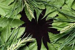 De achtergrond van de lente met groene bladeren Groene jonge bladeren op een bruine suèdeachtergrond Plaats voor de tekst Voor on Stock Afbeelding