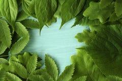 De achtergrond van de lente met groene bladeren Groene jonge bladeren op een turkooise achtergrond Plaats voor de tekst Voor ontw Royalty-vrije Stock Foto's