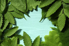 De achtergrond van de lente met groene bladeren Groene jonge bladeren op een turkooise achtergrond Plaats voor de tekst Voor ontw Royalty-vrije Stock Fotografie