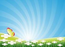 De achtergrond van de lente/van de zomer Royalty-vrije Stock Fotografie