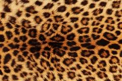 De achtergrond van de luipaard Royalty-vrije Stock Afbeelding