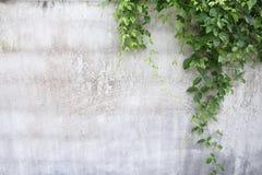 De achtergrond van de muur Stock Foto