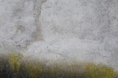 De Achtergrond van de muur met mos royalty-vrije stock fotografie