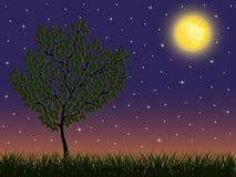 De achtergrond van de nacht met een boom Stock Afbeelding