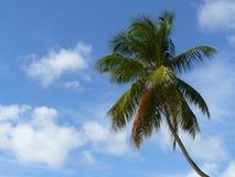 De Achtergrond van de palm Stock Afbeeldingen